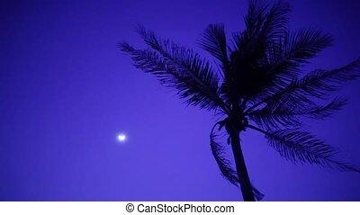 paume, brise, lune, arbre, nuit