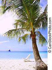 paume, chaise, plage, arbre