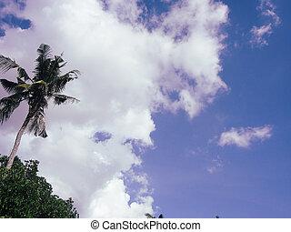 paume, ciel, arbre, exotique, bleu, noix coco, arrière-plan., beau
