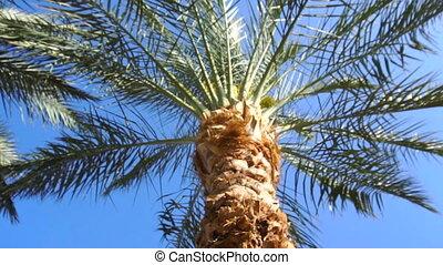 paume, ensoleillé, clair, jour arbre