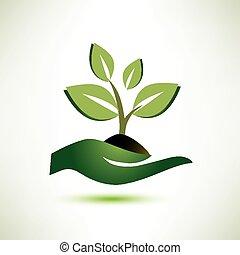 paume, plante, concept, symbole écologie