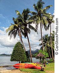 paumes, île, exotique, thaïlande, chang, plage