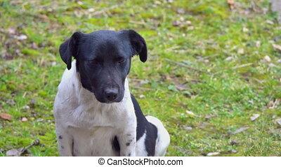 pauvre, blanc, regard, 4k, chien, noir