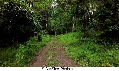 pays boisé, -, arbres, fantasme, en mouvement, forêt, entre, mystérieux, paysages