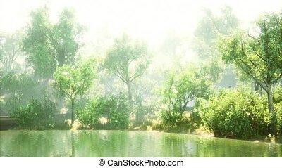 pays boisé, encadré, étang, tranquille, luxuriant, parc, soleil, vert