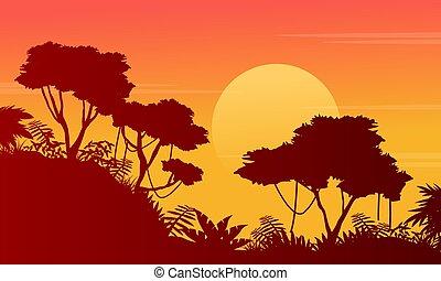 paysage, arbre, silhouette, jungle, beauté