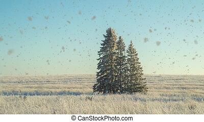 paysage, cinemagraf, boucle, vidéo, neige-couvert, trois, weather., champ, ensoleillé, sapin, chute neige, beau, arbres, hiver