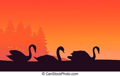 paysage, coucher soleil, cygne, silhouette