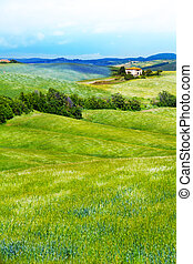 paysage, fleur, toscane, italie, classé