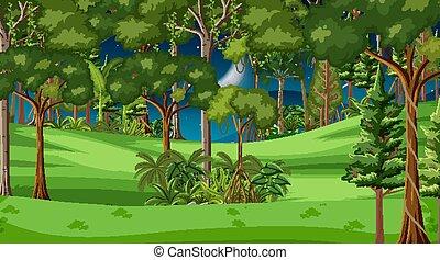 paysage, forêt, arbres, scène, nuit, beaucoup