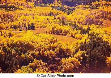 paysage, forêt, coloré, automne