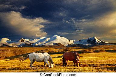 paysage montagne