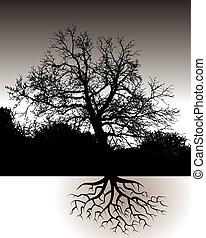 paysage, racines, arbre