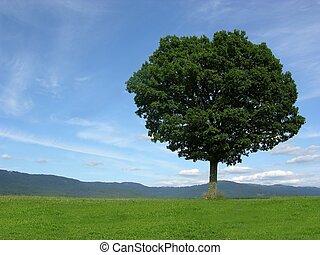 paysage, solitaire, paysage arbre
