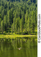 paysage, vert, lac, paysage, forêt