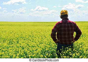 paysan, récolte, canola