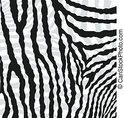 peau, texture, résumé, zebra, vecteur
