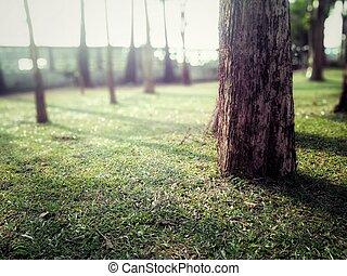 pelouse, parc