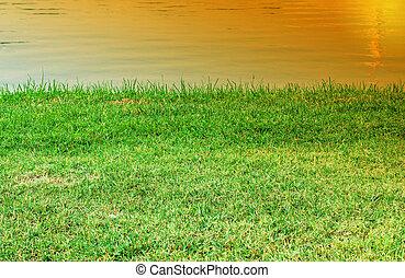 pelouse, park., vert