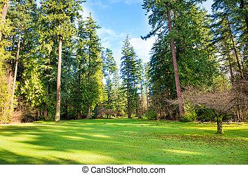 pelouse verte, parc, arbres