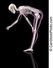 pencher, squelette, femme