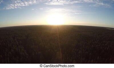 pendant, sur, voler, forêt, sunset.