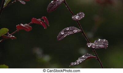 perlé, pluie