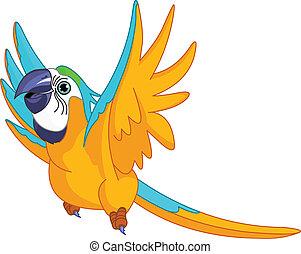 perroquet, voler