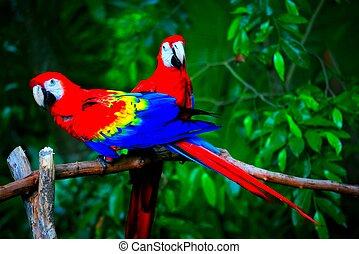 perroquets, paire, beau, image, vue