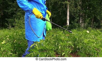 pesticide, protéger, pomme terre