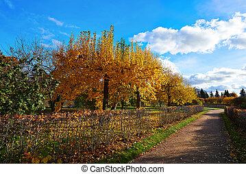 peterhof., ville, doré, autumn., parc, russie