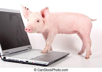 petit, ordinateur portable, cochon