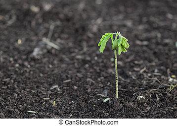 petit, plante