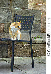 petite italie, (lucca, tuscany)., chat repos, chaise, rouges