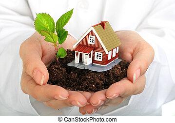 petite maison, plante, hands.