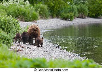 petits, ours