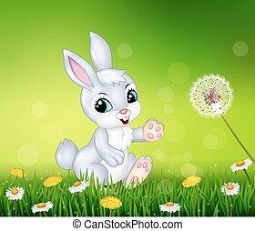 peu, lapin, herbe, marche