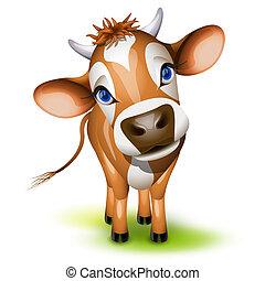 peu, vache jersey