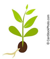 peu, vecteur, morphology., -, plante, illustration, graine, croissant