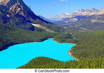peyto, parc national, lac, banff