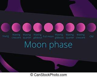 phases, pleine lune, moon., couleur, illustration, pourpre, vecteur, croissant