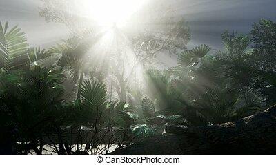 philippines, nergros, île, 4k, forêt, rivière, jungle