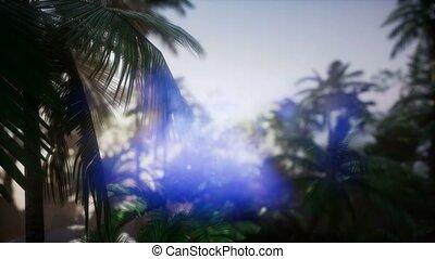 philippines, nergros, île, forêt, rivière, jungle