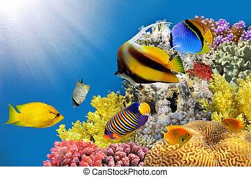 photo, corail, colonie, sommet, récif