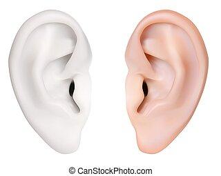 photo-realistic, ear., vector., isolé, humain, blanc