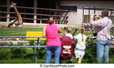 photographies, famille, repos, zoo, girafe, prendre, avoir