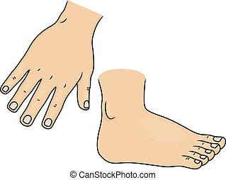 pied, parties du corps, main