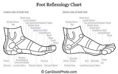 pied, reflexology, -, diagramme, allemand