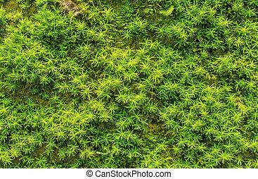 pierre, vert, envahi, mousse, forêt