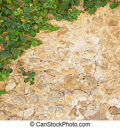 pierre, vieux, mur, feuilles, vert, lierre
